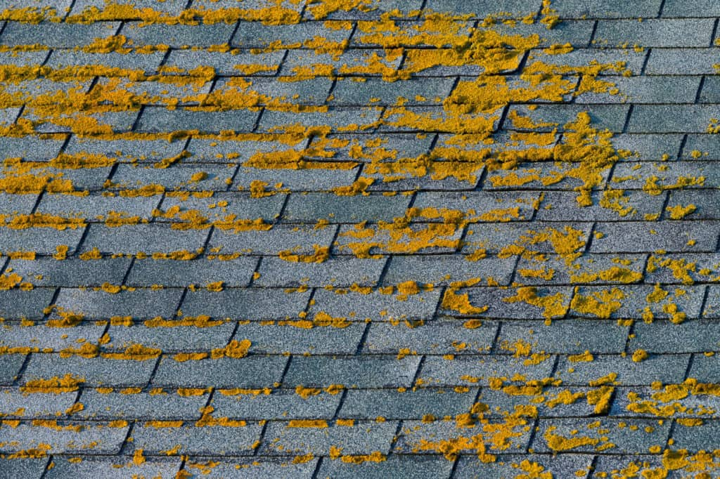 THE BENEFITS OF ALGAE RESISTANT ROOF SHINGLES